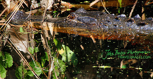 Photo tour images from a Florida wildlife tour