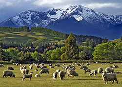 Where sheep may safely graze, near Te Anau, New Zealand - Strictly copyrighted John T. Baker Photographer LLC, JayBee Stock.com