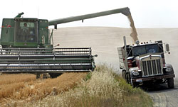 Loading grain into a truck from the combine hopper. The Palouse, Idaho - Strictly copyrighted John T. Baker Photographer LLC, JayBee Stock.com