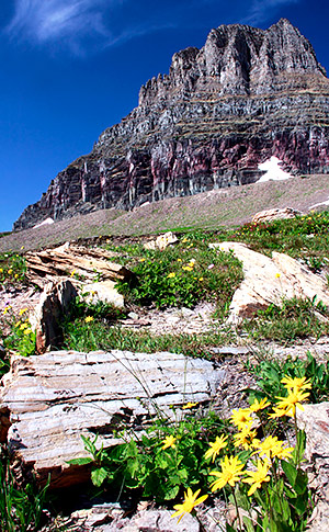 Photo library image from Glacier National Park in Montana
