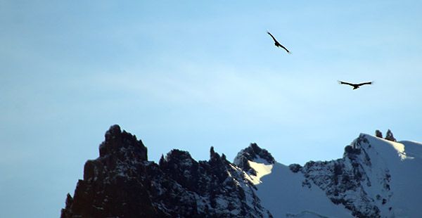Patagonia photo tour image two condors in flight over Torres del Paine National Park, Chile
