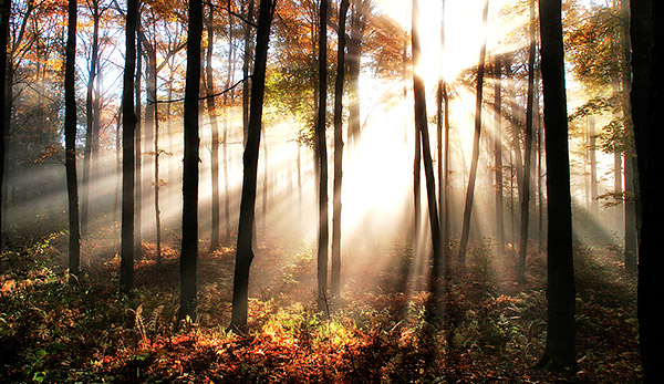 Specatacular fog and sun in the colorful woods, Vermont, New England